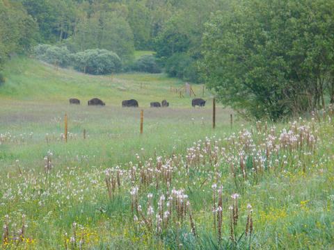Resultado de imagen de romanico palentino y bisontes